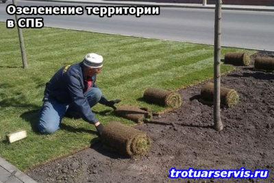 Озеленение территории в Санкт-Петербурге