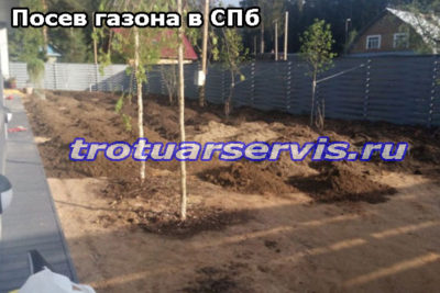 Посев газона в СПб