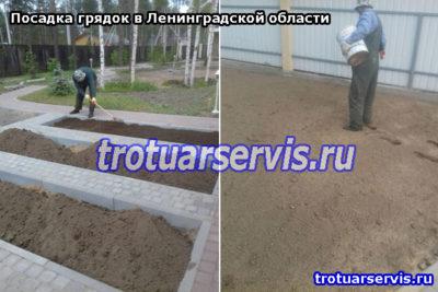 Посев газона вручную. Ленинградская область