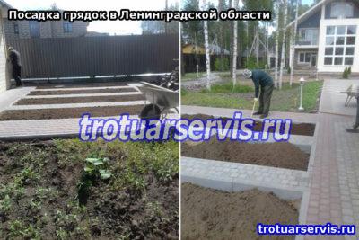 Грядки на даче: посадка грядок в Ленинградской области