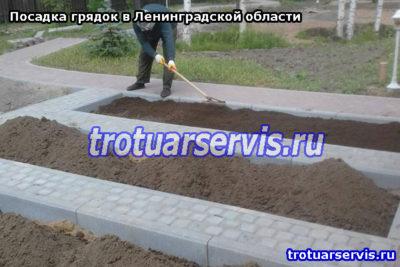 Озеленение дачного участка в Ленинградской области