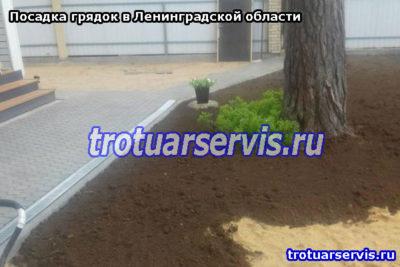 Грядки на даче в Ленинградской области