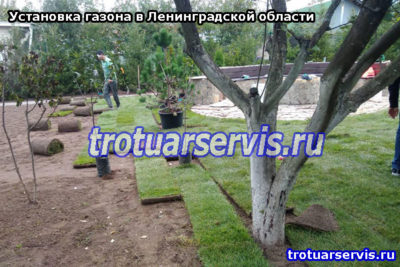 Озеленение территории: посадка деревьев и кустов (Ленинградская область, СПб)